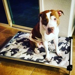 anti-tear dog bed for pitbull