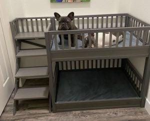 dog bed bunk