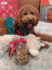 dog next to trader joes dog treats - biy dog biscuit mix