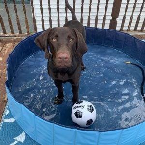 durable dog pool
