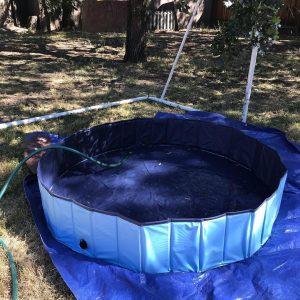 Indestructible Dog Pool