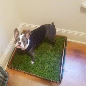 indoor dog bathroom
