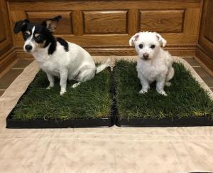 indoor dog pee area