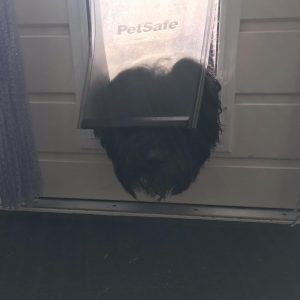 weather proof dog door