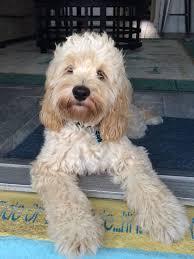 AJ'S Love Our Pups LLC