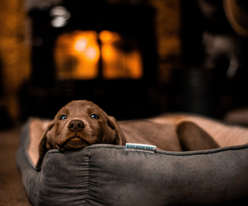 Best Couch for Dogs