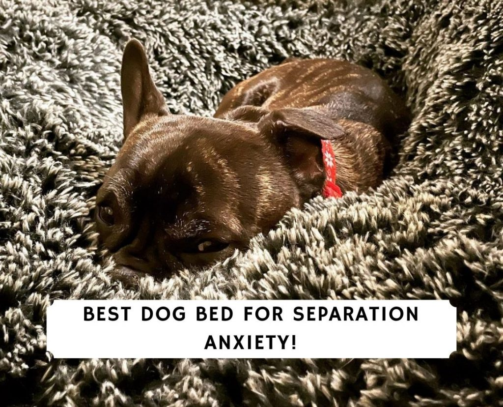 Best Dog Bed For Separation Anxiety