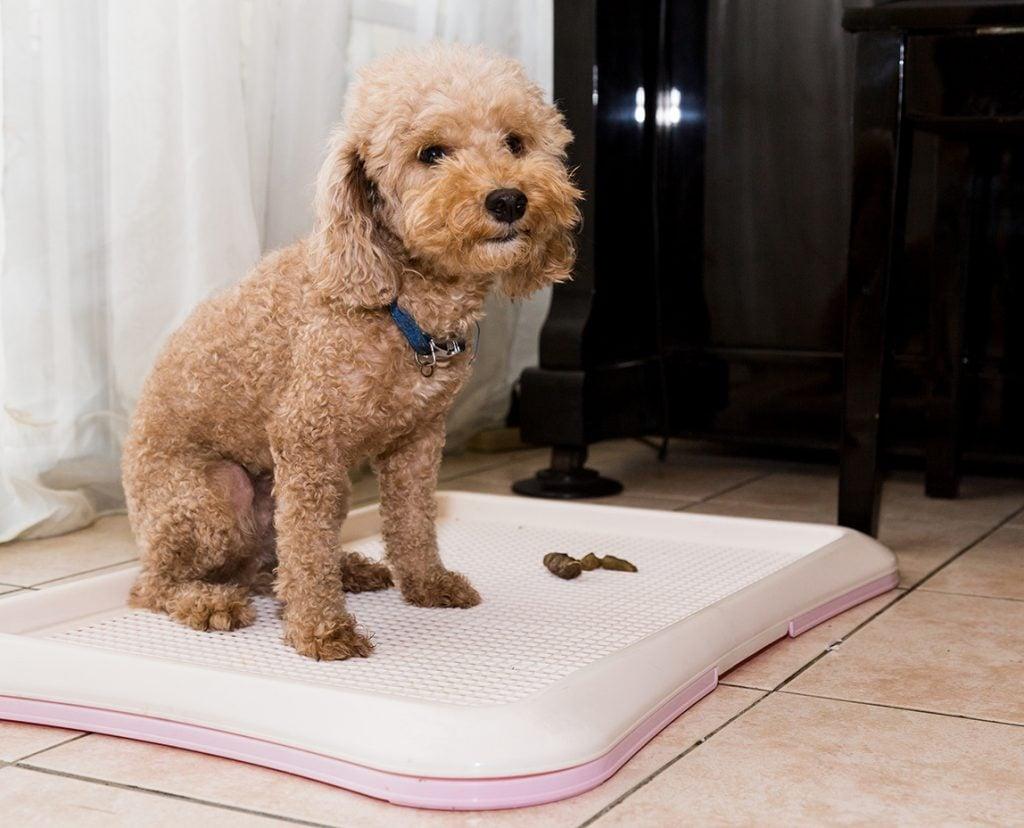 Best Dog Litter Box