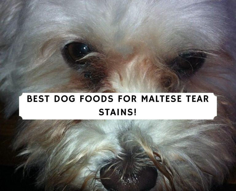 Best Dog foods for Maltese Tear Stains