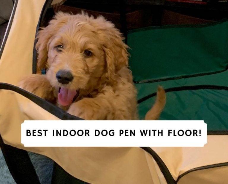Best Indoor Dog Pen With Floor