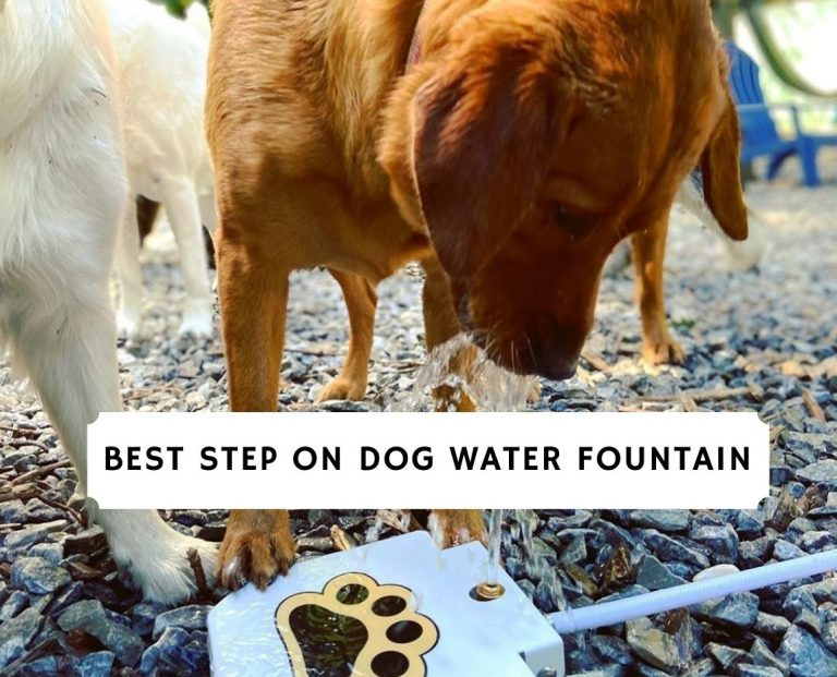 Best Step On Dog Water Fountain