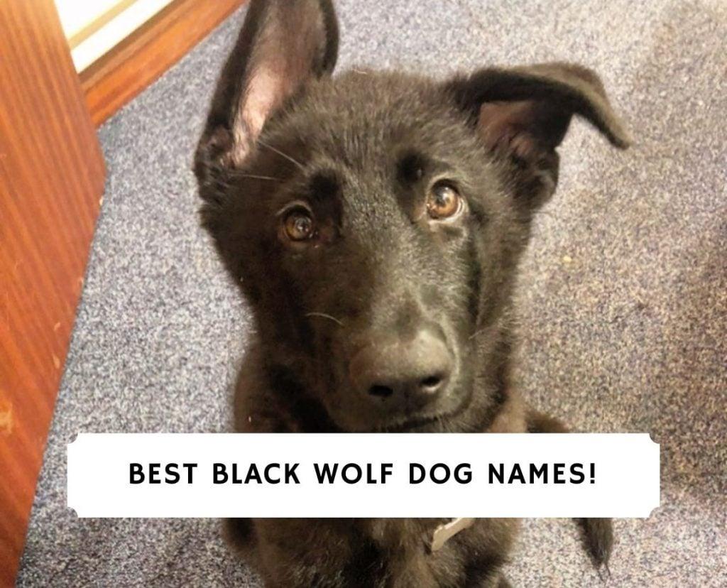 Black Wolf Dog Names