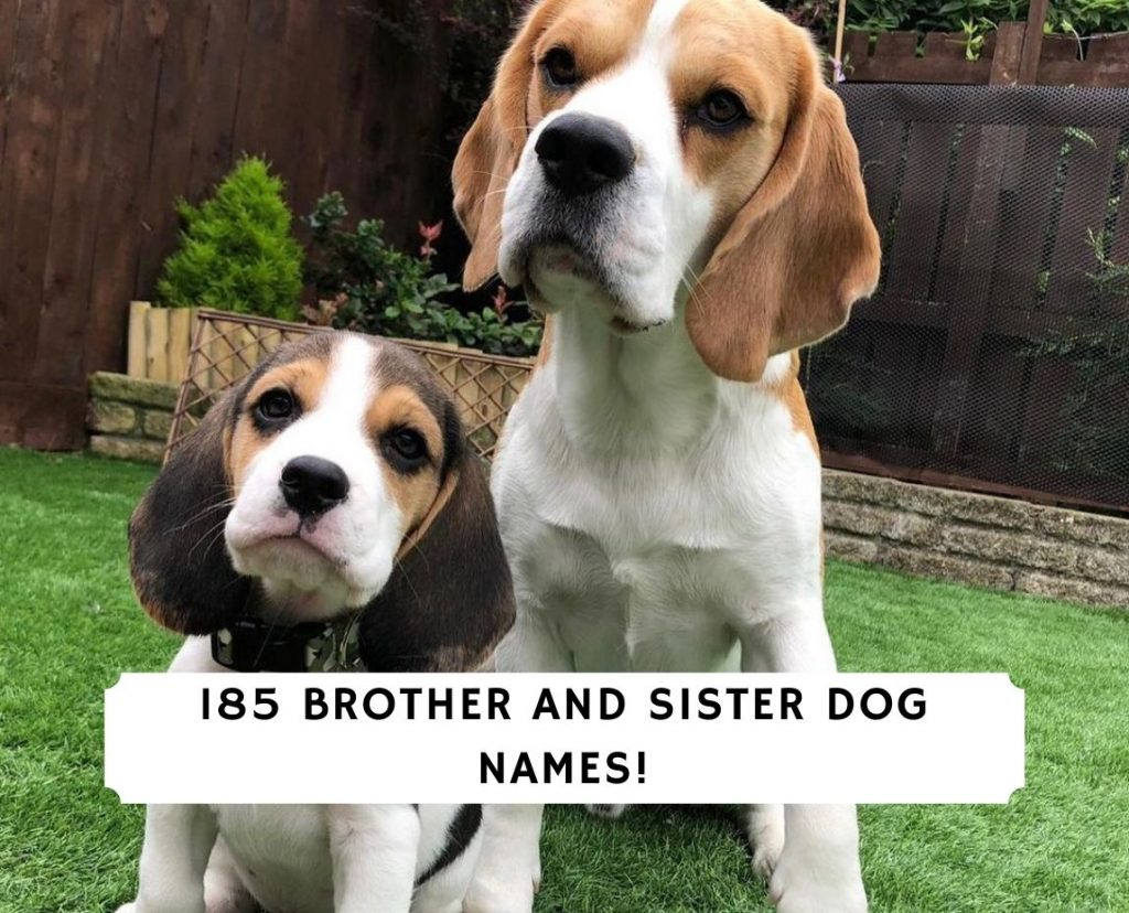 Brother and Sister Dog Names