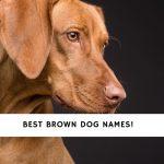 Brown Dog Names