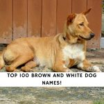Brown and White Dog Names