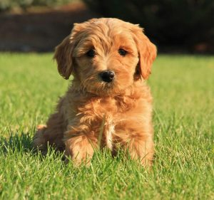 Choosing A Name For Your Brown Dog