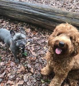 Cockapoo Dog Names