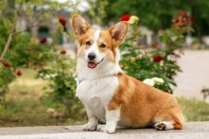FEMALE WELSH DOG NAMES