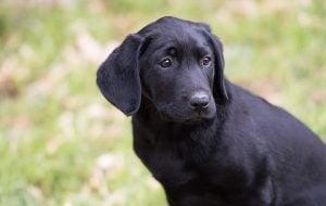 Female Black Dog Names