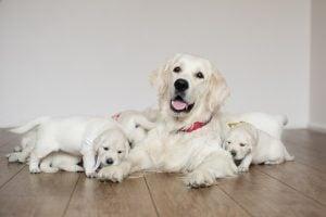 Female Cream-Colored Dogs Name
