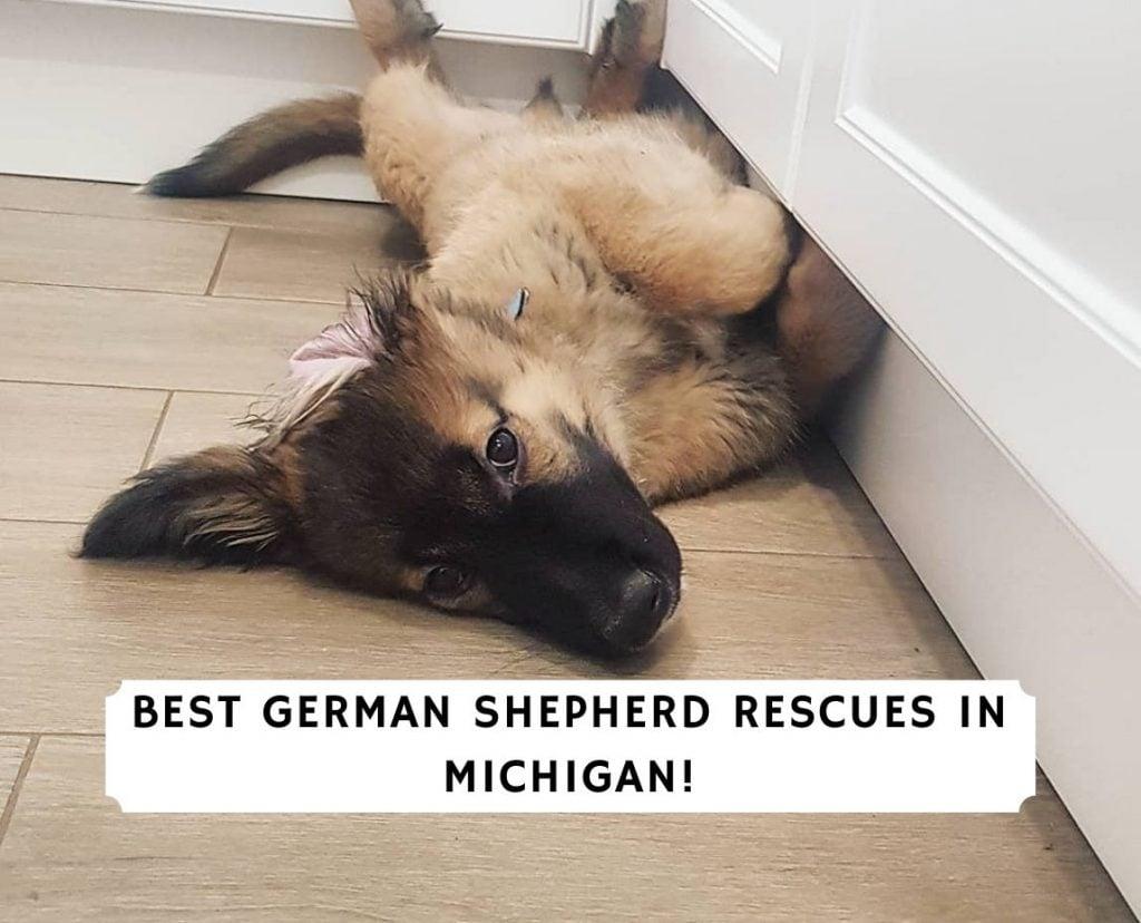 German Shepherd Rescues in Michigan
