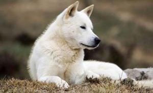 Cute Korean Dog Names