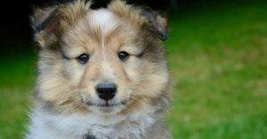 Cute Korean Male Dog Names