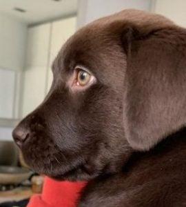 Labrador Health