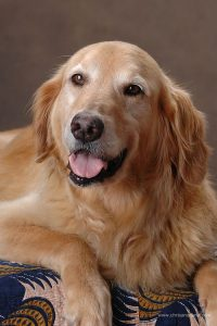 Lowcountry Goldens