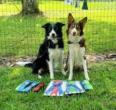 M Bar M Border Collies