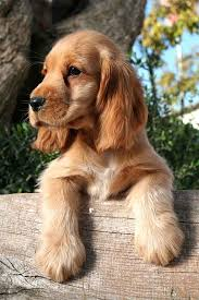 MALE BROWN DOG NAMES