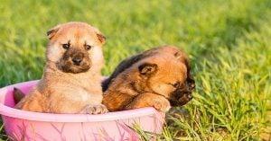 MALE DOG WELSH NAMES