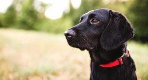 Male Black Dog Names