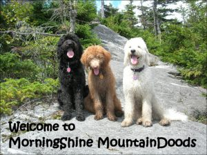 MorningShine MountainDoods-Doodles of Vermont
