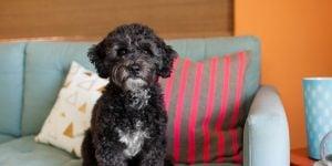 Organic Substances For Black Dog Names