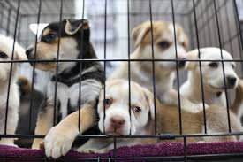 Pet Stores and Animal Shelters