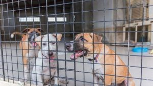 Pet Stores and Animal Shelters in south dakota