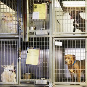 Pet Stores and Local Shelters