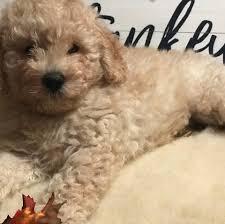 Powderhill Puppies