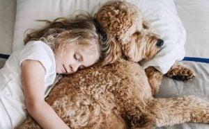 Responsibility Goldendoodles