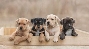 BROWN and WHITE NAMES for dogs
