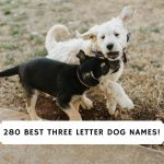 Three Letter Dog Names