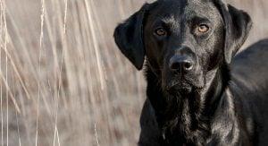 Tough Black Dog Names