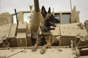 WHY ARE DOGS USED DURING WARS