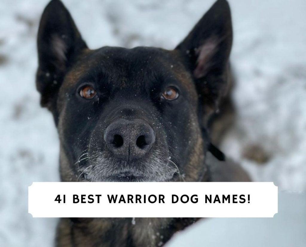 Warrior Dog Names
