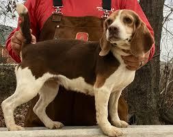 Wood's Weir Creek Beagles