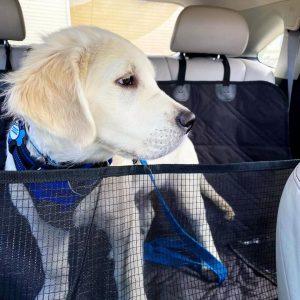 backseat dog hammock