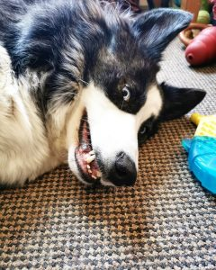 best dog food for dogs with bad breath
