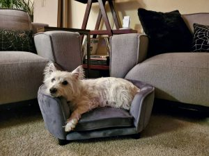 dog bed that looks like a couch