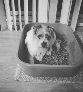 dog poop box